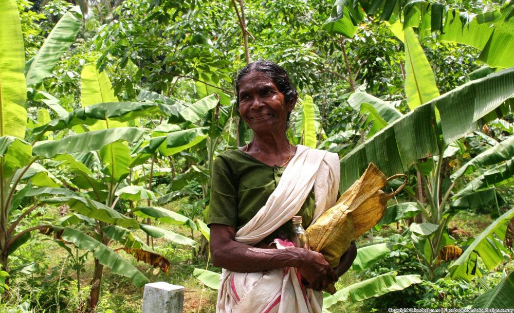 Photo in Random #india #kerla #village woman #old lady