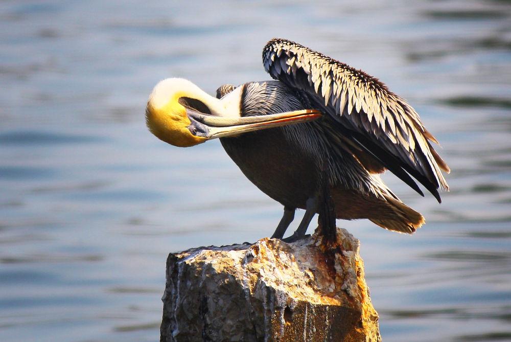 Photo in Random #sea #shore #coast #seagull #pelican #seagulls #shoreline #gull #coastline #seabirds #pelicans #gulls #terns #tern #seabird