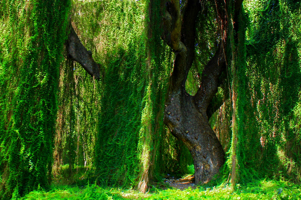 Photo in Random #trees #tree #forest #woods #woodlands #forests #evergreen #evergreen woods