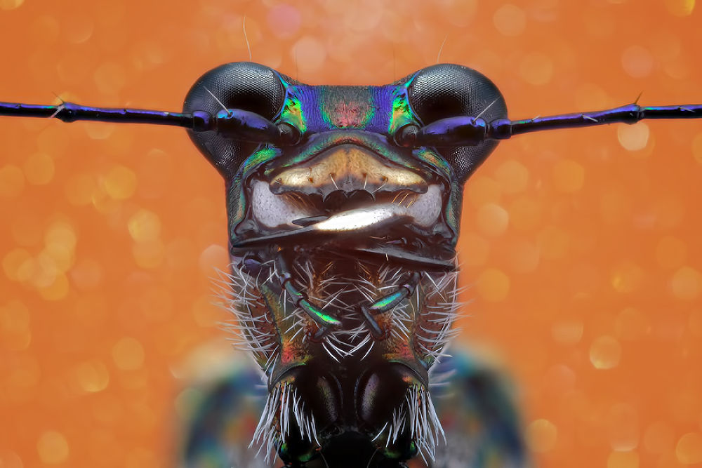 Photo in Macro #nikon #focus #macro #animals #micro #bugs #insects