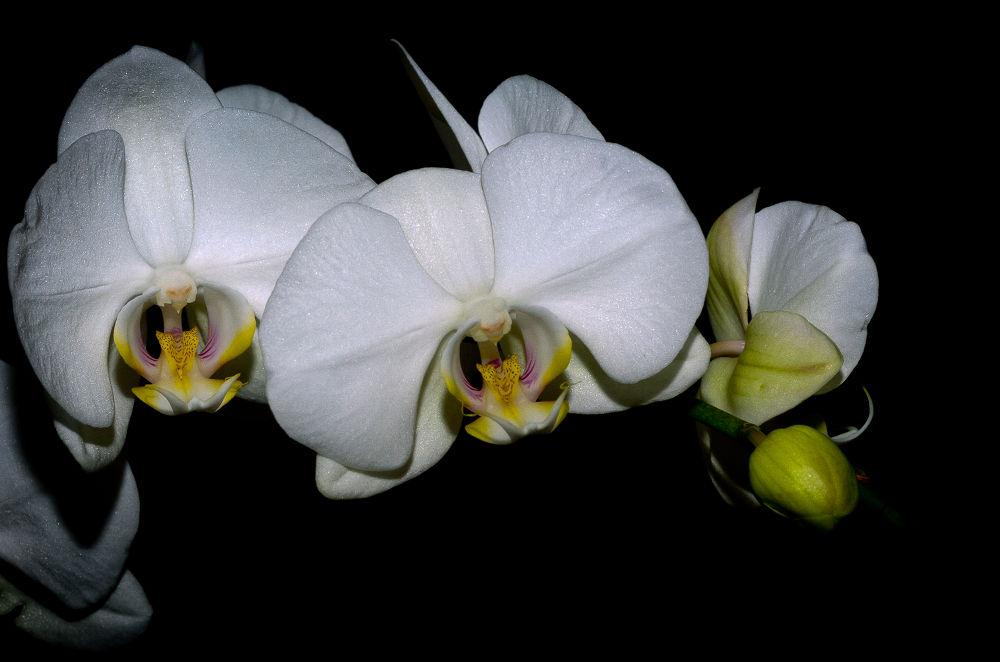 Photo in Random #orchidee #fleurs
