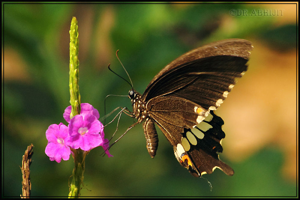 Photo in Nature #nature #butterfly #wild life