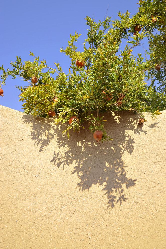Photo in Random #iran #yazd #tree #pomegranate