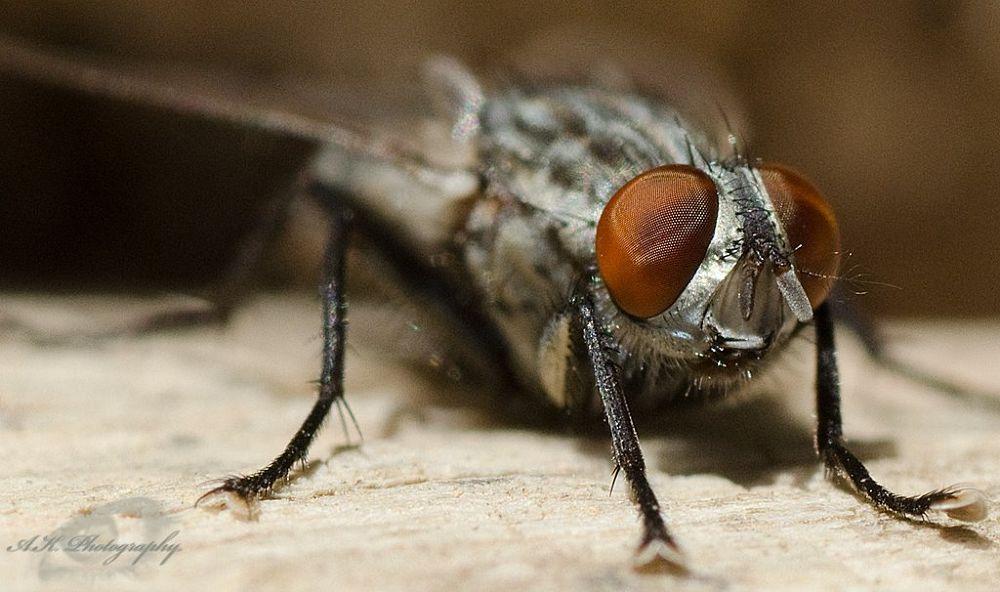 Photo in Macro #bug #nature #bee #macro #wings #insect #closeup #wing #natgeo
