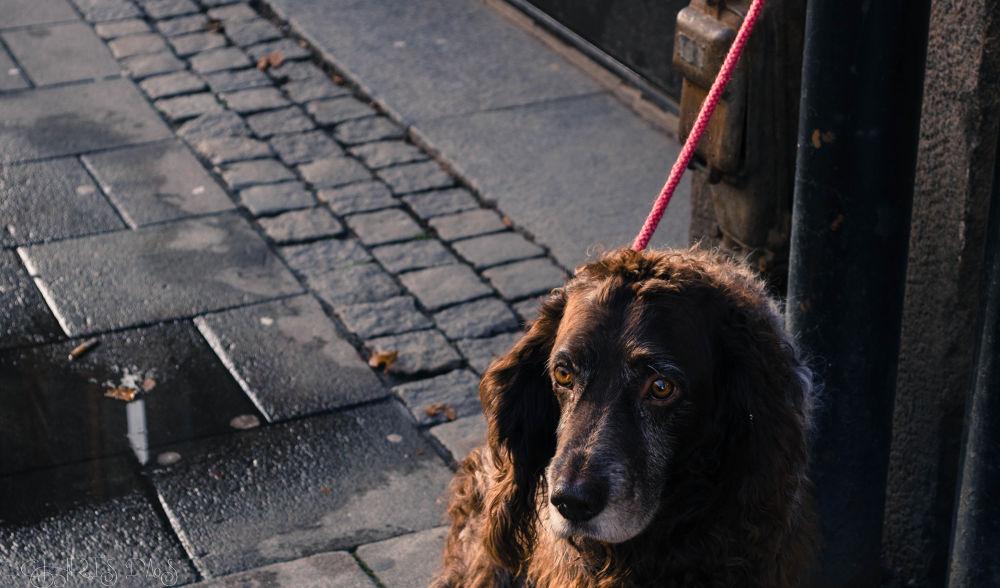 Photo in Random #street #dog #sad #eyes #candid