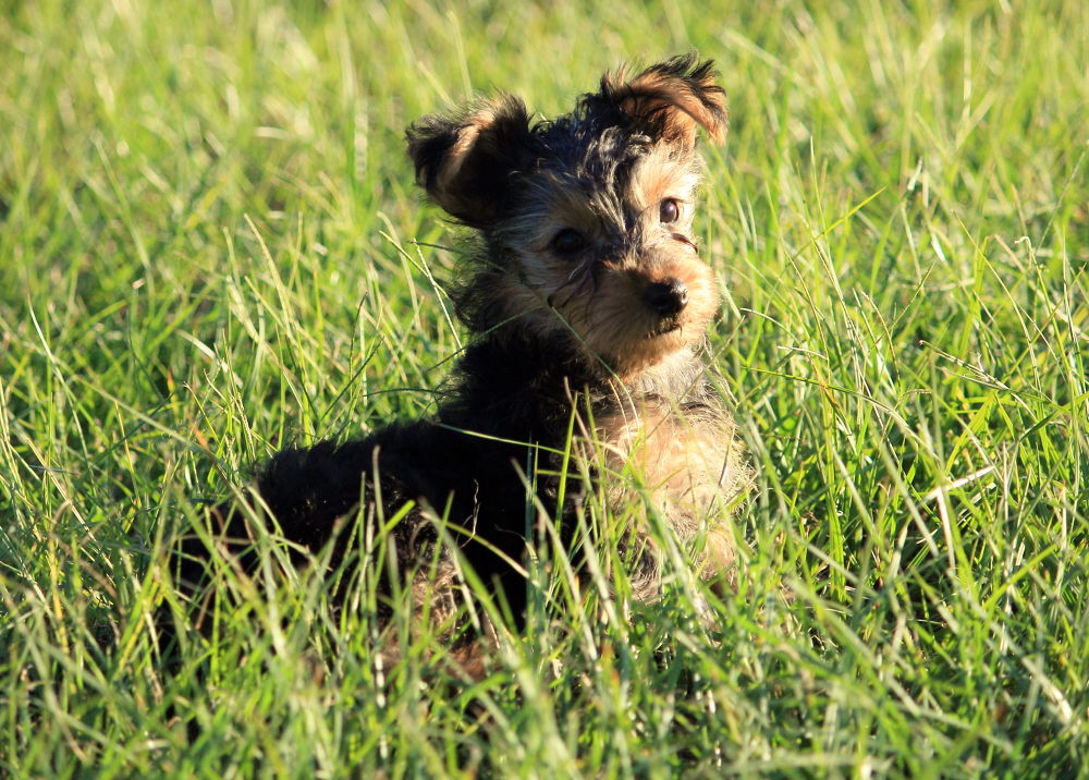 Photo in Random #dogs #animals #pets #animals photography dogs pets #photographry
