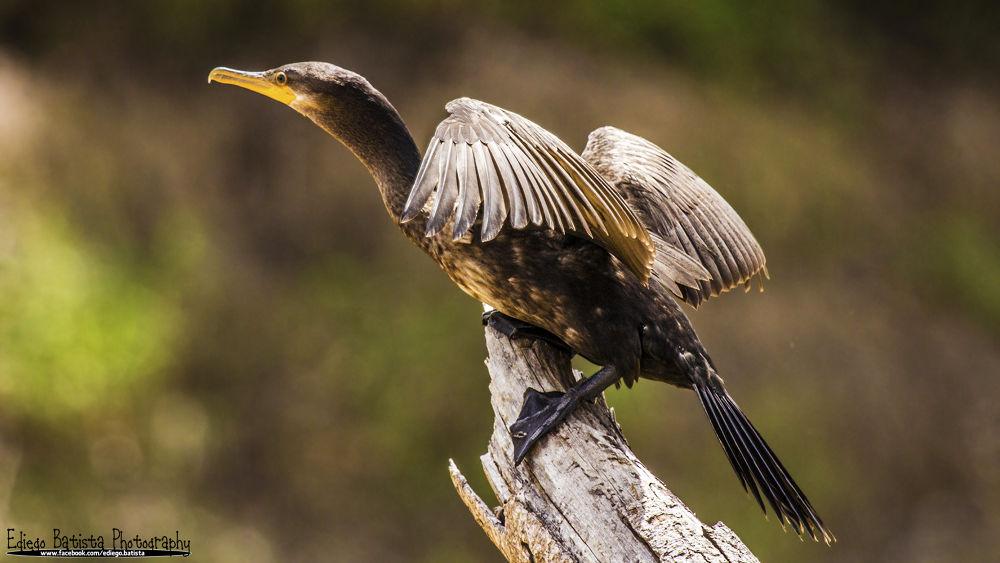 Photo in Nature #bird #nature #amazon