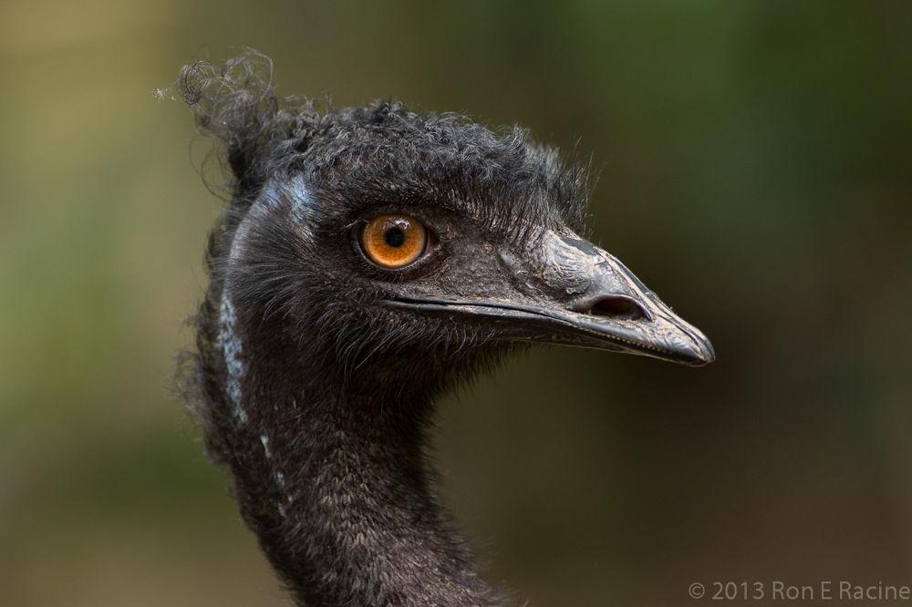 Photo in Nature #nature #birds
