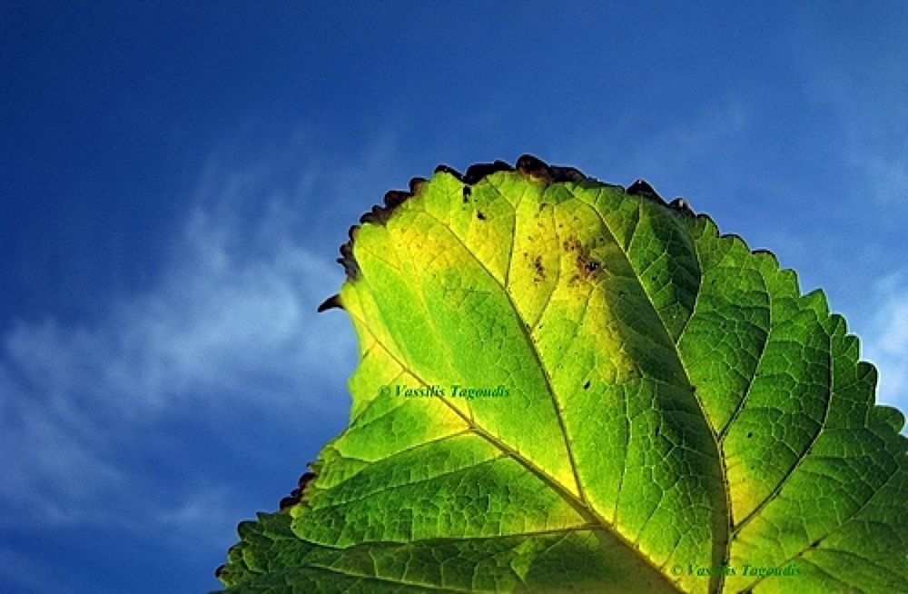 Photo in Nature #blue #sky #green #leaf #fall #autumn #tree #leaves #yellow #color