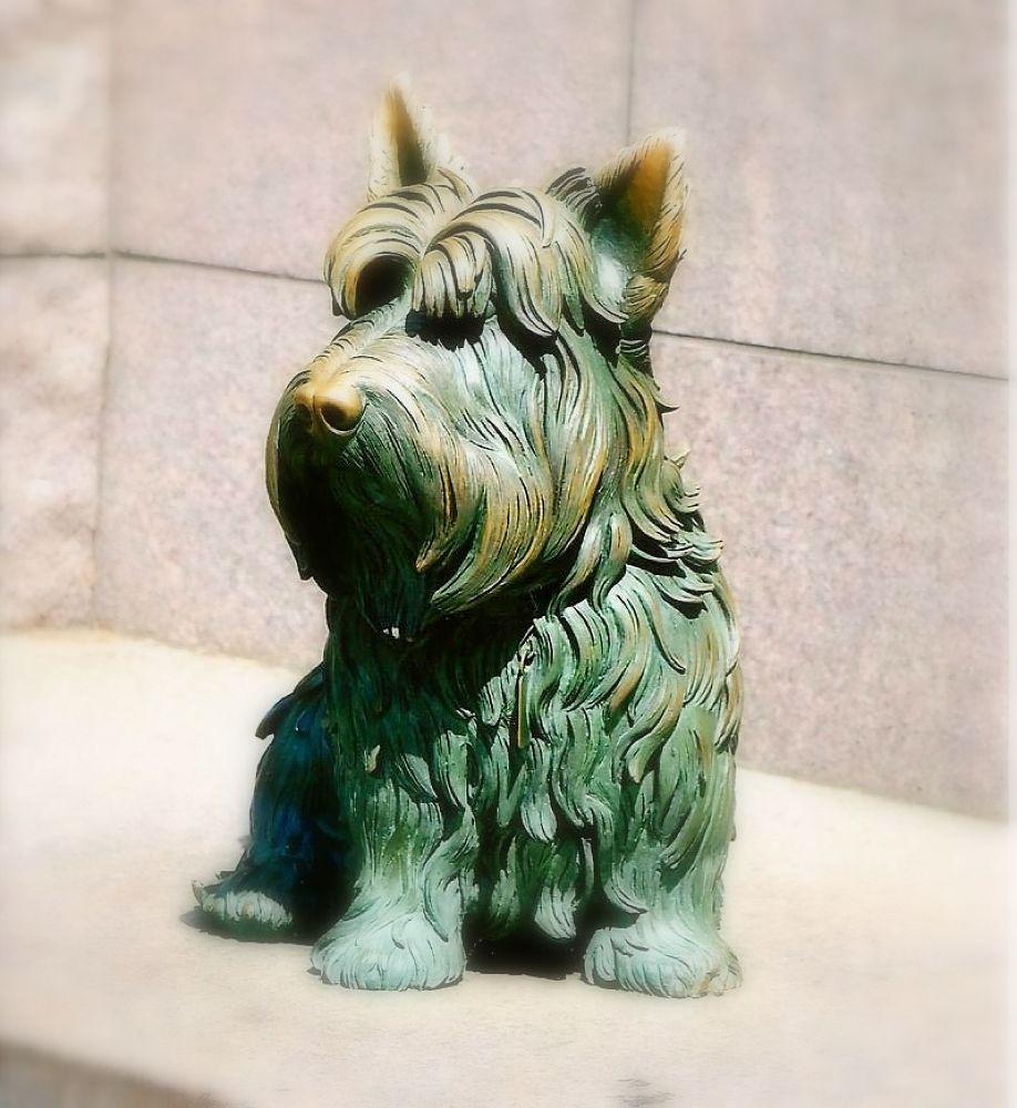 Photo in Random #dog #statue #fdr #fala