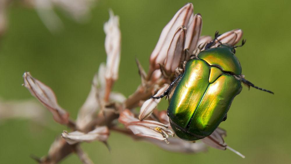 Photo in Animal #animals #bugs #nature #shimon aluf