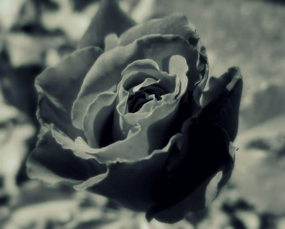 Photo in Random #otras flores por angel garcia