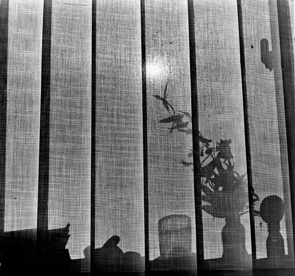Photo in Random #shadows