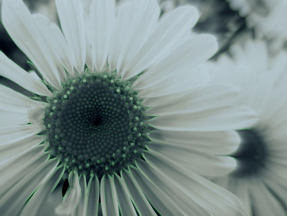 Photo in Random #otras flores