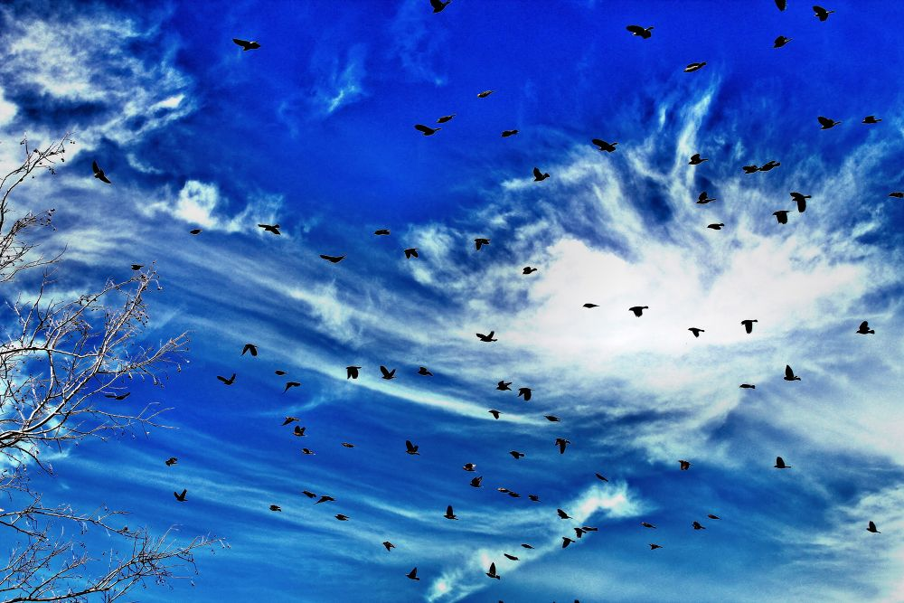 Photo in Random #blue #clouds #sky #birds #ks #tyler elbert #picture perfect photography #high range #mcpherson kansas
