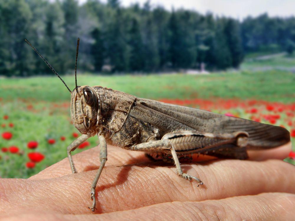 Photo in Macro #bugs #animals #shimon aluf