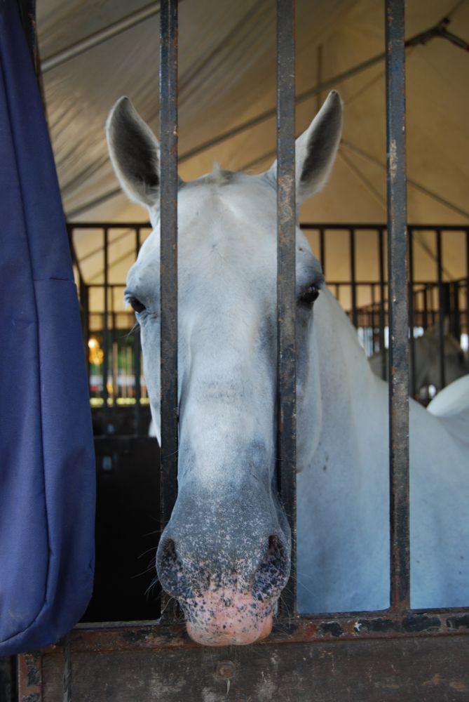 Photo in Random #horse