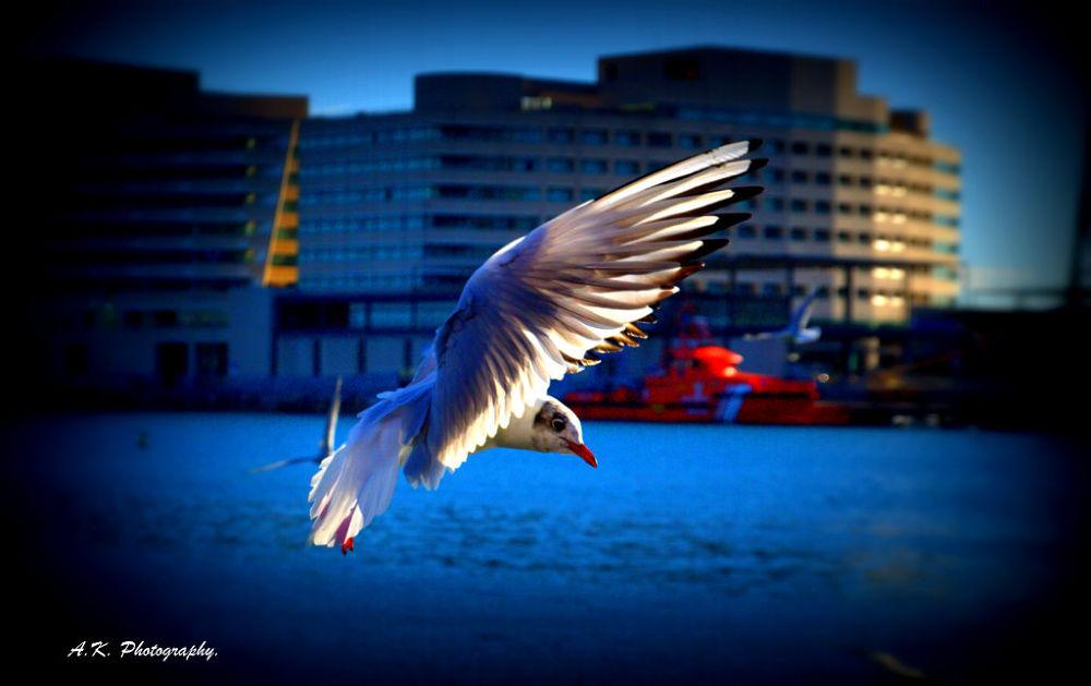Photo in Animal #view #animal #bird #sea #seagull #gull #sea gull