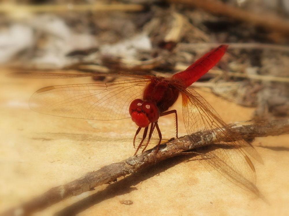 Photo in Random #miradas por angel garcia traba