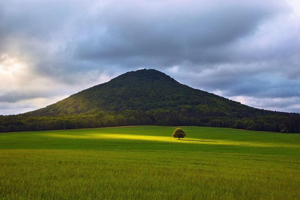 Photo in Landscape #light #hill #sun #tree #forest #field #grass #chestnut #czech republic #czech switzerland